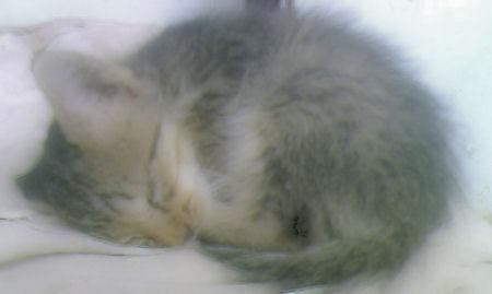 kucing-tidur.jpg
